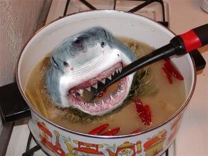 shark-soup
